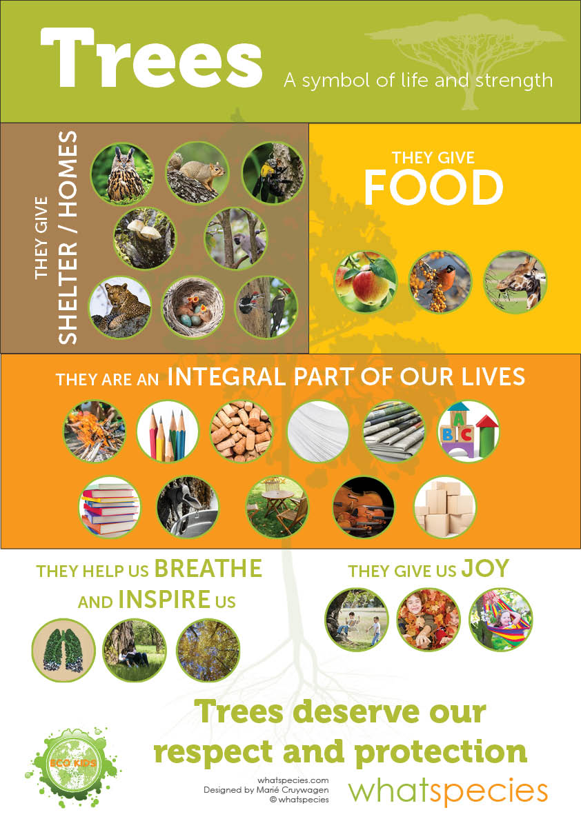 Life of Trees Infographic